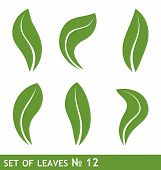 Illustration Of Leaves Set For Design