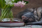 Cat, flowers, book and glasses poster