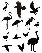 picture of ostrich plumage  - Abstract vector illustration of various birds silhouettes - JPG