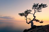 Alone tree on the edge of the cliff against the backdrop of the Black Sea at sunset time poster