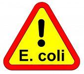 foto of e coli  - EHEC  - JPG