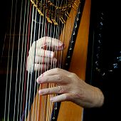 Two Hands Of A Woman Plucking The Strings Of A Harp. poster