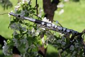picture of piccolo  - Flute piccolo on the branch of apple tree - JPG