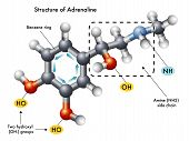 pic of neurotransmitter  - medical illustration of the structure of adrenaline - JPG