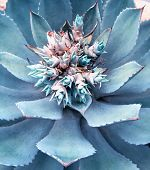 stock photo of century plant  - Macro of succulent plant in the desert - JPG