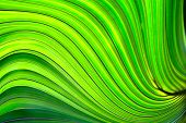 foto of brighten  - a close up of a palm leaf with swirls brightened with hdr