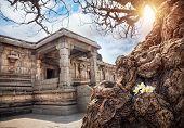 stock photo of vijayanagara  - Old tree with white flowers near ancient ruins of Vijayanagara Empire at blue sky in Hampi Karnataka India  - JPG