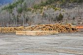 pic of railcar  - Logs and Timber Stacked in a Saw Mill - JPG