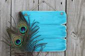 Blank antique blue sign with peacock feathers