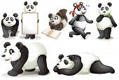 foto of panda  - Illustration of the seven pandas on a white background - JPG
