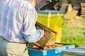 stock photo of honey bee hive  - Beekeeper checking the box  - JPG