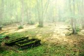 stock photo of derelict  - derelict old graves in the wood - JPG