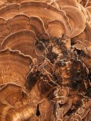 picture of bracket-fungus  - abstract close up of bracket - JPG