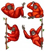 stock photo of orangutan  - Illustraion of a set of orangutan - JPG