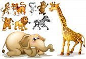 foto of carnivores  - Illustration of a set of many animals - JPG