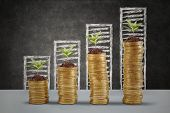 stock photo of golden coin  - Plants growing up on the golden money coins with business graph background - JPG