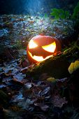 foto of jack-o-laterns-jack-o-latern  - Glooming pumpking halloween latern with lit candle on tree root with fallen leaves around - JPG