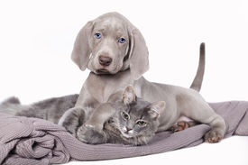 picture of coon dog  -  puppy and kitten  - JPG