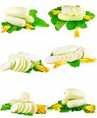 pic of marrow  - Collage  - JPG