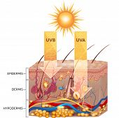 image of pigment  - UVB and UVA radiation penetrate into skin - JPG