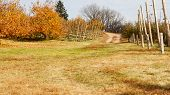 picture of apple orchard  - Apple Orchard trees full of rippend apples - JPG