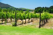 stock photo of south-western  - South Africa vineyard valley landscape - JPG