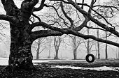 picture of tire swing  - A tire swing hangs alone in the fog - JPG