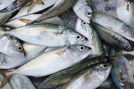 foto of fish  - Background of fresh fish on the Asian fish market - JPG