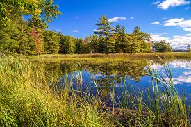 stock photo of ecosystem  - Shore of a wetland habitat showcases the beauty of these wild ecosystems - JPG