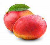 pic of mango  - Fresh mango fruit isolated on white background - JPG