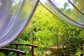 picture of curtain  - Meditation gardens taken from a gazebo with curtains - JPG