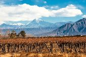 picture of andes  - Volcano Aconcagua and Vineyard - JPG