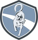 pic of husky sled dog breeds  - Illustration of a siberian husky dog of the spitz breed full body viewed from the front set inside crest shield done in retro style on isolated bacgkround - JPG