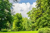 picture of conifers  - Large clearing in the park among the conifers and deciduous trees on the background of the sky with clouds - JPG