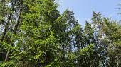 foto of greenery  - forest - JPG