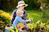 Beautiful Woman And Her Cute Son Planting Seedlings In Bed In The Domestic Garden At Summer Day. Gar poster