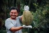 Asian Farmer Holding Durian Is A King Of Fruit poster