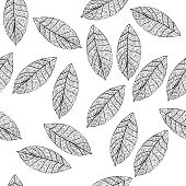 Vector Leaves On White Field. Uncolored Botany Illustration. poster