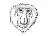 Retro Cartoon Style Drawing Of Head Of A Proboscis Monkey, A Medium-sized Arboreal Primate In Borneo poster