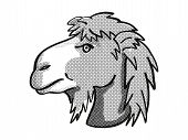 Retro Cartoon Mono Line Style Drawing Of Head Of A Bactrian Camel Or Camelus Bactrianus, An Endanger poster