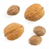 nutmeg spice isolated on white background