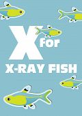 image of x-ray fish  - X for the X - JPG