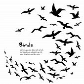 stock photo of flock seagulls  - Silhouettes of black flying birds - JPG