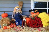 stock photo of fall decorations  - Scarecrow Harvest and Flowers Pumpkins Corn  - JPG