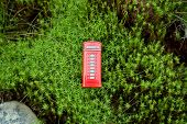pic of phone-booth  - Red phone booth standing in the forest - JPG