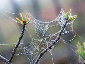 foto of cobweb  - The spider web  - JPG