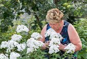 pic of meadowsweet  - mature woman with flowers at a garden - JPG
