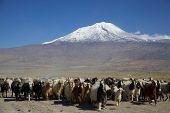stock photo of noah  - Ararat - JPG