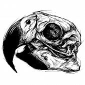 pic of dead-line  - Macaw Skull traditional ball point pen drawing line work 002 vector for Use - JPG
