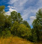 picture of steppes  - forest and steppe landscape day autumn season - JPG